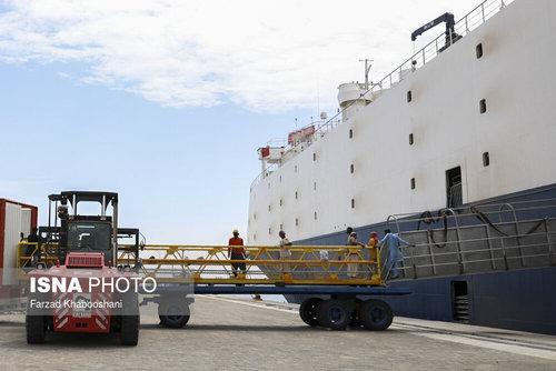 واردات گوسفند از رومانی با کشتی (عکس) - 3