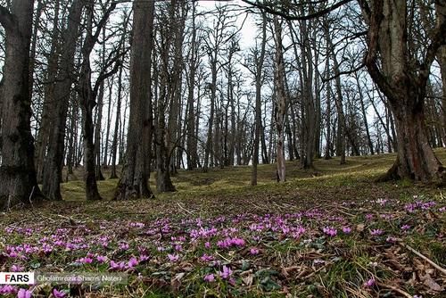اسبهای وحشی در جنگل دالخانی مازندران (عکس) - 14