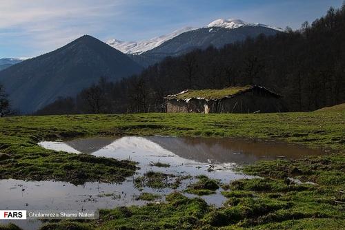 اسبهای وحشی در جنگل دالخانی مازندران (عکس) - 4