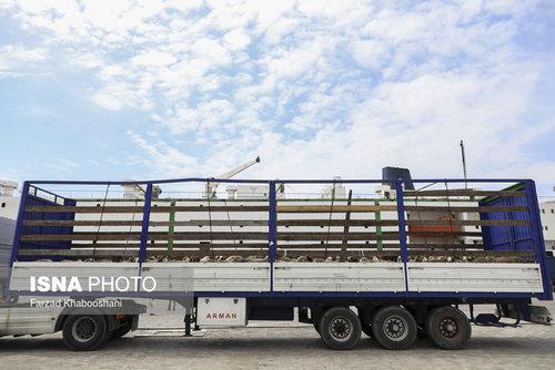 واردات گوسفند از رومانی با کشتی (عکس) - 7