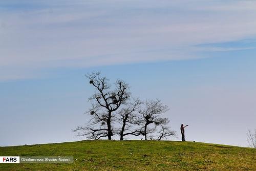 اسبهای وحشی در جنگل دالخانی مازندران (عکس) - 10