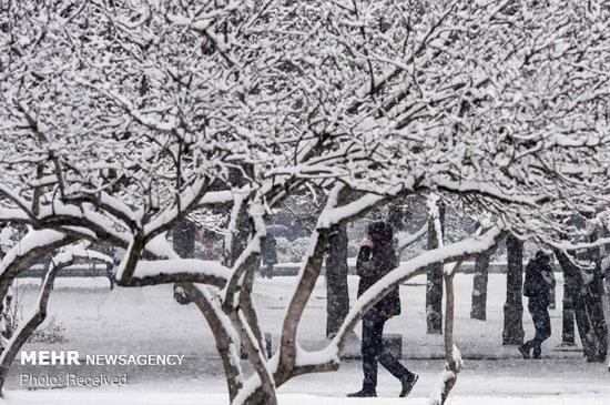 برف سنگین در آسیا، اروپا و روسیه - 4