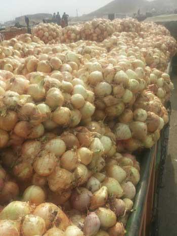 پشت پرده خروج پیاز و سیبزمینی از کشور - 3