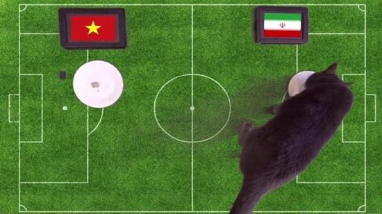 گربه پیشگو، برد ایران مقابل ویتنام را پیشبینی کرد - 3