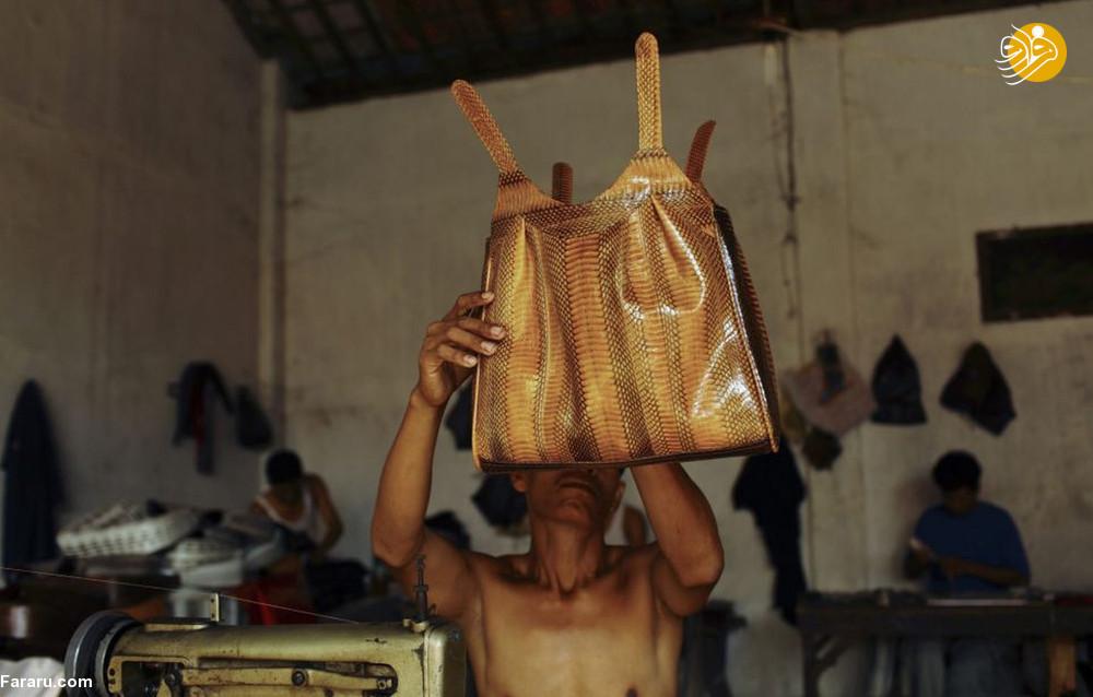 (تصاویر) سلاخی مارها برای ساخت کیف و کفش! - 21