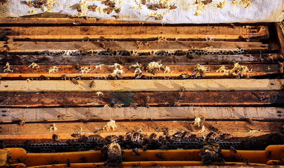 (تصاویر) گشتی در هرمزگان پایتخت زمستانی عسل - 3