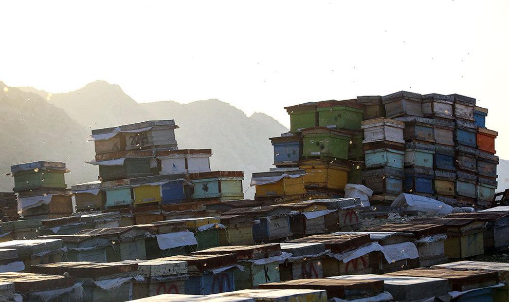 (تصاویر) گشتی در هرمزگان پایتخت زمستانی عسل - 5