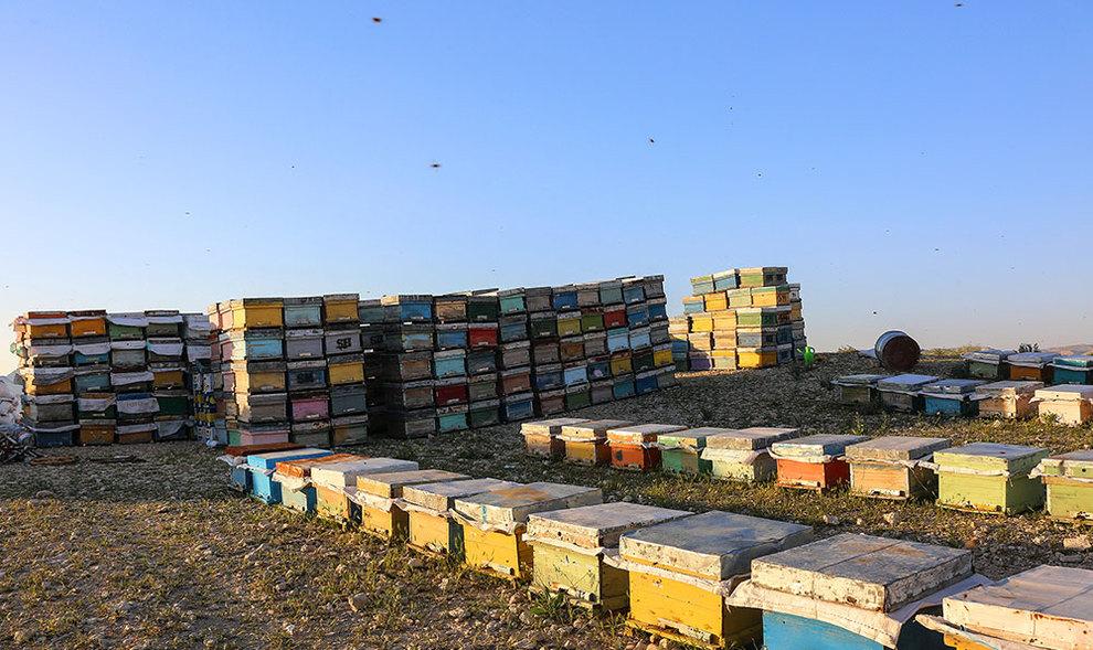 (تصاویر) گشتی در هرمزگان پایتخت زمستانی عسل - 4