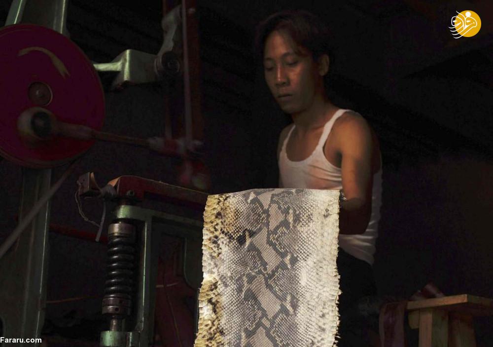 (تصاویر) سلاخی مارها برای ساخت کیف و کفش! - 19