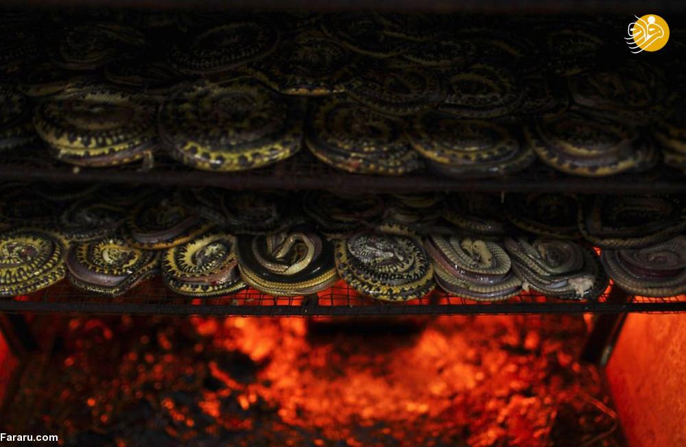 (تصاویر) سلاخی مارها برای ساخت کیف و کفش! - 10