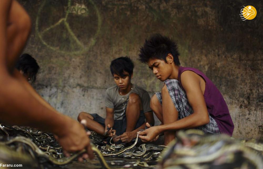(تصاویر) سلاخی مارها برای ساخت کیف و کفش! - 14