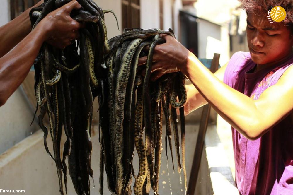 (تصاویر) سلاخی مارها برای ساخت کیف و کفش! - 12