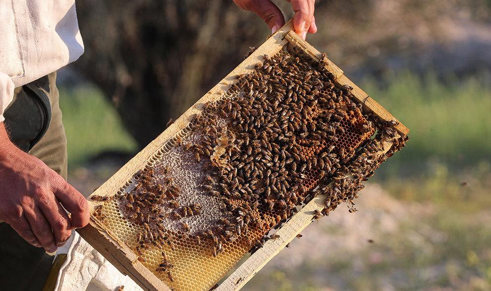 (تصاویر) گشتی در هرمزگان پایتخت زمستانی عسل - 8