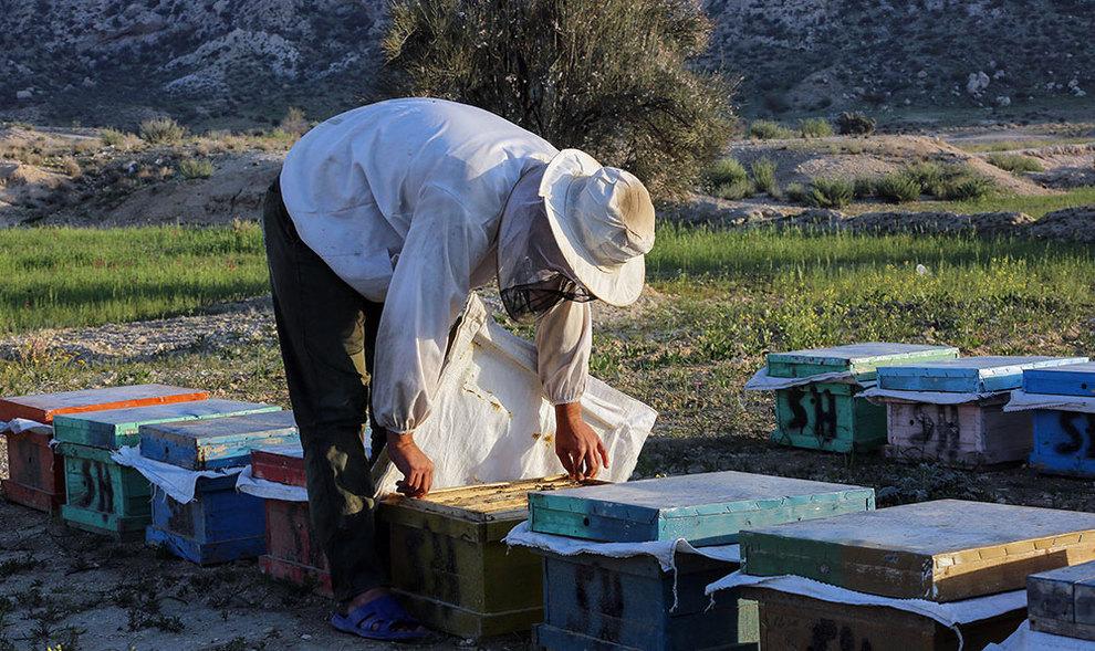 (تصاویر) گشتی در هرمزگان پایتخت زمستانی عسل - 9