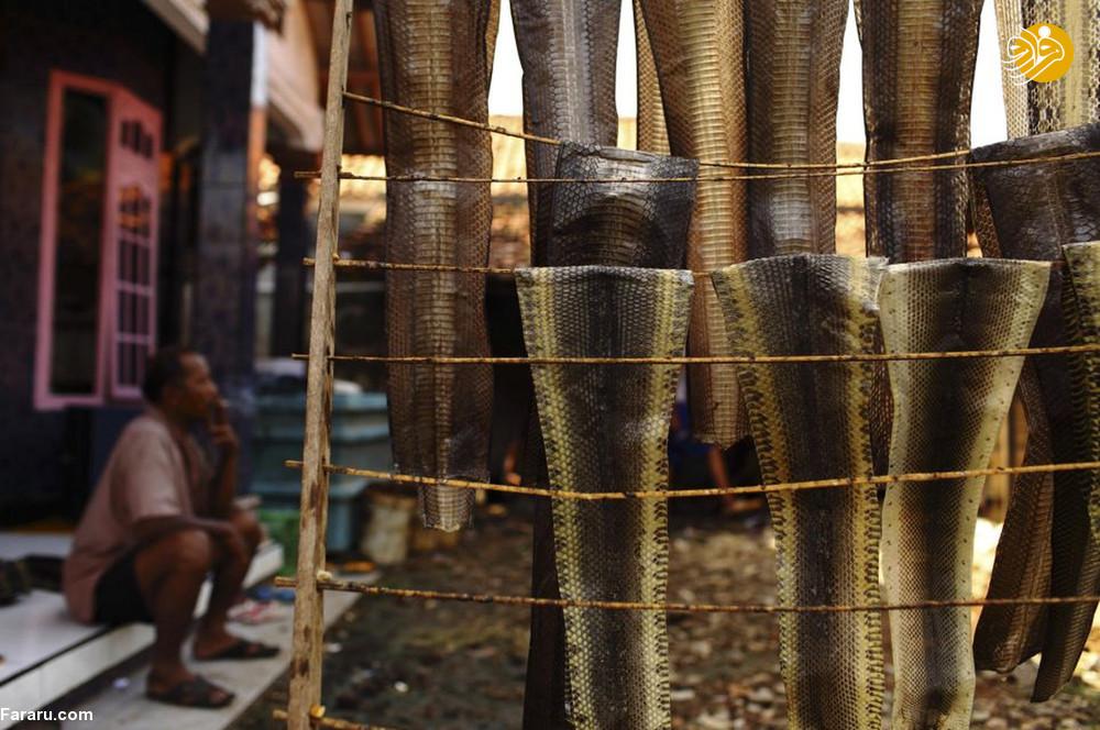 (تصاویر) سلاخی مارها برای ساخت کیف و کفش! - 18
