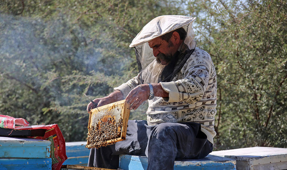 (تصاویر) گشتی در هرمزگان پایتخت زمستانی عسل - 15