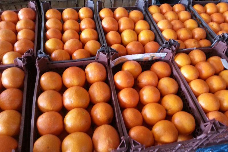 توزیع میوه نوروزی در استان مرکزی آغاز شد