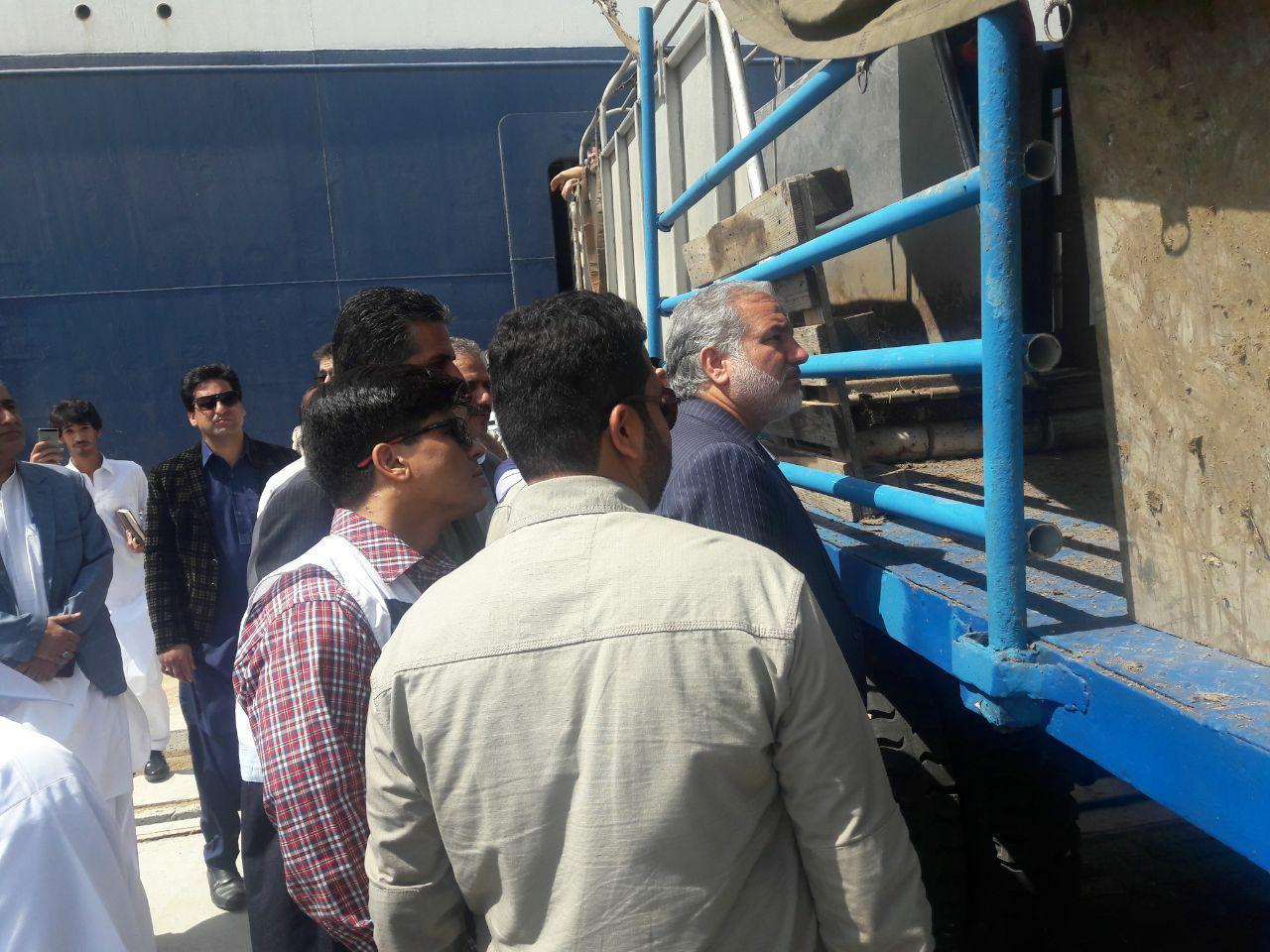 واردات دام زنده در بندرچابهار ظرفیت ایجاد ۱۵ هزار شغل را دارد