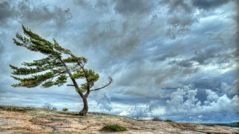 پیش بینی وزش باد شدید در قزوین