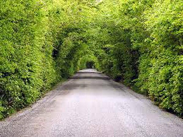 تونل جنگلی «صفرابسته» کجاست؟ - 0