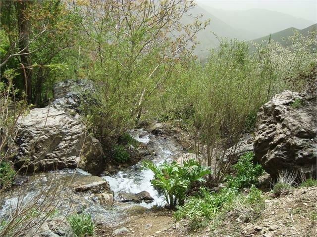 نمونه برداری از آب قنات «کن» به منظور حفظ حیات درختان