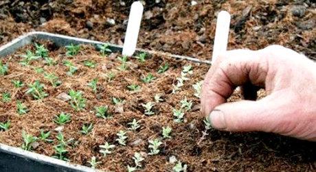 افزایش کارایی بذرهای گیاهی با فناوری کوتینگ