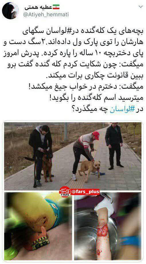 سگهای بچههاپولدارهای لواسان که به جان مردم میافتند+عکس - 1