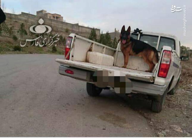 جزییات حمله دو سگ به دختر ۱۰ ساله در لواسان +عکس - 2