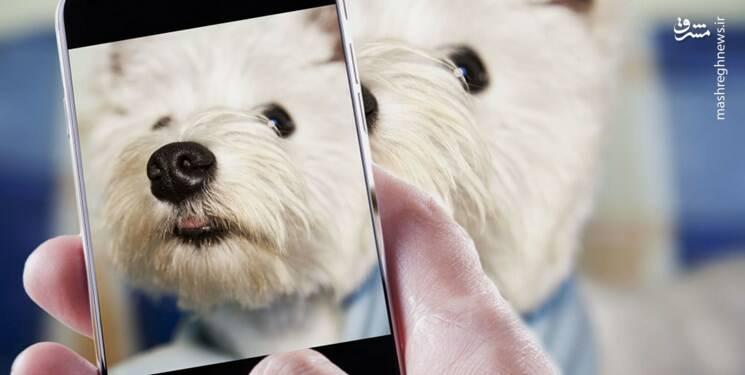روایتی از تولد برای سگهای خانگی - 5