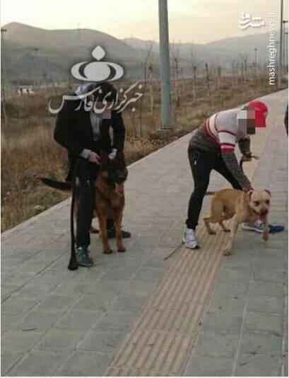جزییات حمله دو سگ به دختر ۱۰ ساله در لواسان +عکس - 11