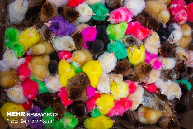 تب و تاب بازار اراک در آستانه نوروز - 24