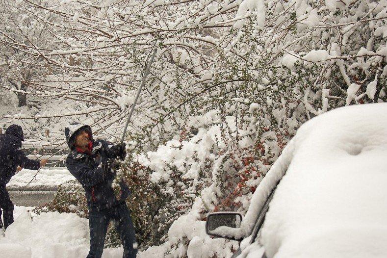 برف تکانی درختان کرج با ۳۰۰ نیرو/اهمیت همکاری شهروندان - 7
